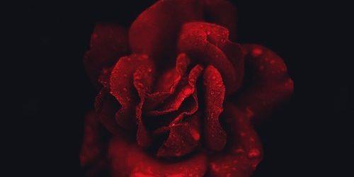 Alex Sonata feat. Dean Chalmers – My Heart