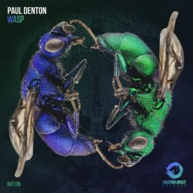 Paul Denton – Wasp
